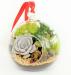 Цены на Мини - флорариум с суккулентами (12 см).